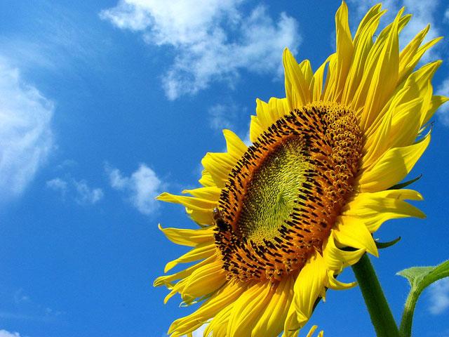 夏休みは総復習の絶好のチャンス!page-visual 夏休みは総復習の絶好のチャンス!ビジュアル