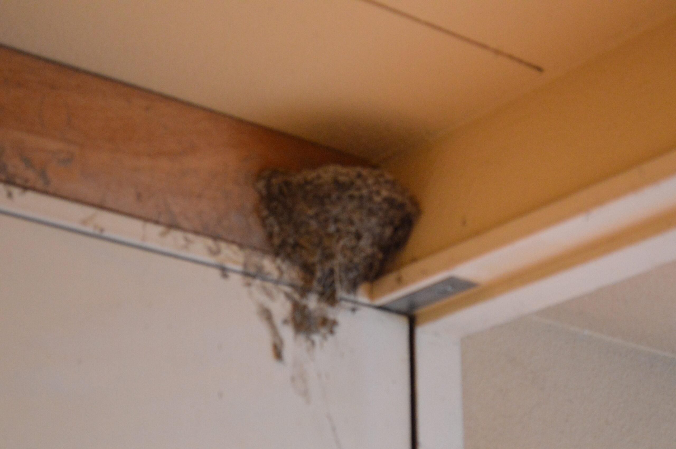 ツバメの巣page-visual ツバメの巣ビジュアル